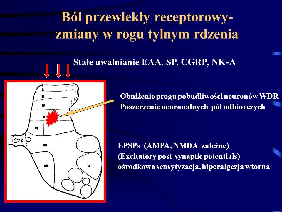 Ból przewlekły receptorowy- zmiany w rogu tylnym rdzenia