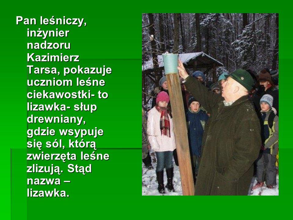 Pan leśniczy, inżynier nadzoru Kazimierz Tarsa, pokazuje uczniom leśne ciekawostki- to lizawka- słup drewniany, gdzie wsypuje się sól, którą zwierzęta leśne zlizują.