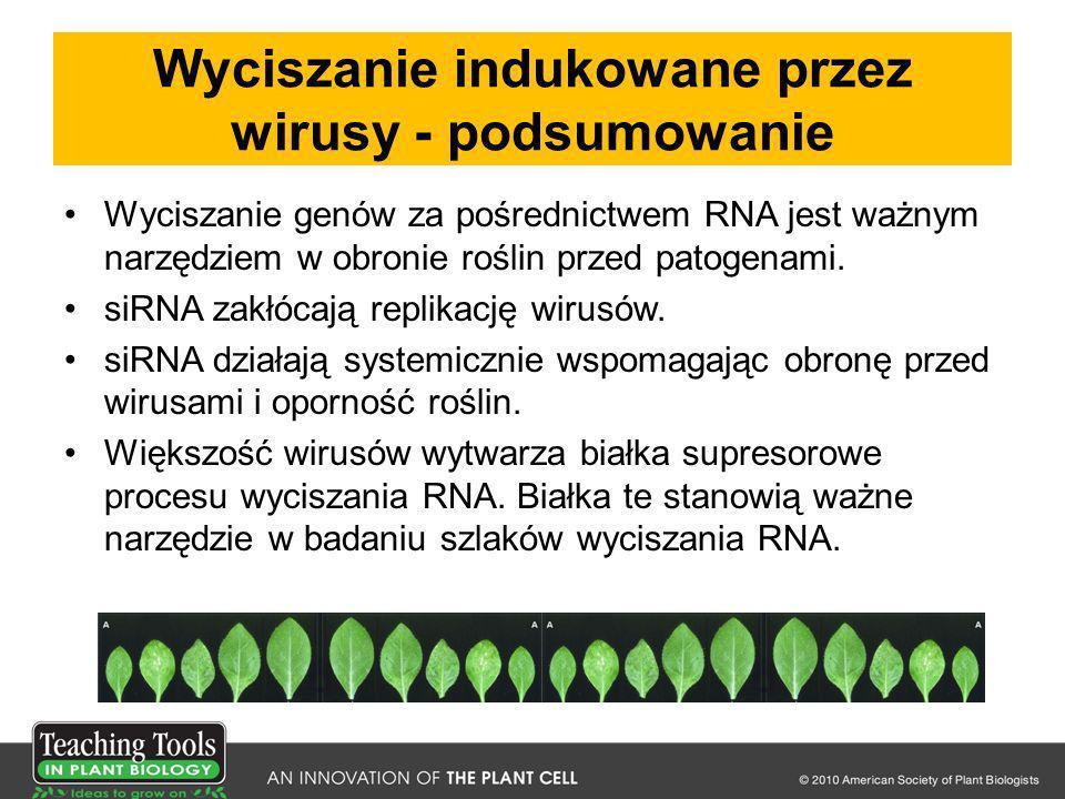 Wyciszanie indukowane przez wirusy - podsumowanie