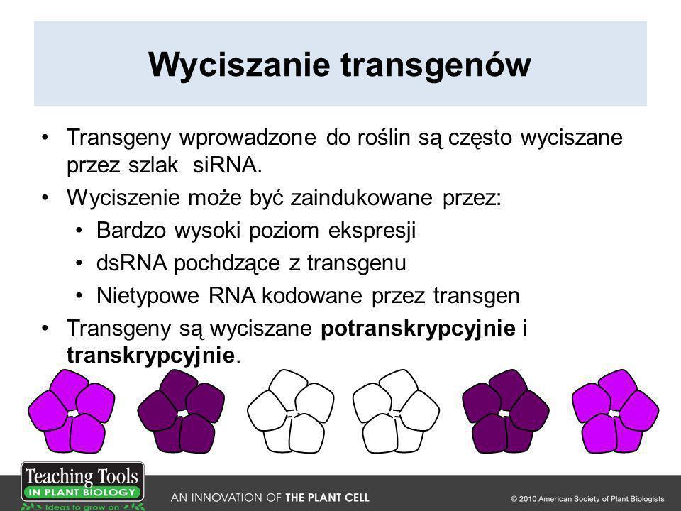 Wyciszanie transgenów