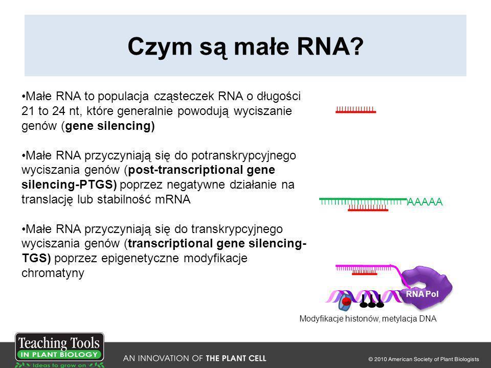 Czym są małe RNA Małe RNA to populacja cząsteczek RNA o długości 21 to 24 nt, które generalnie powodują wyciszanie genów (gene silencing)