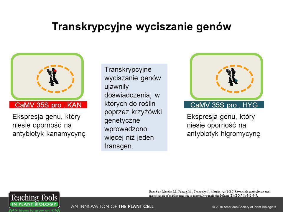 Transkrypcyjne wyciszanie genów