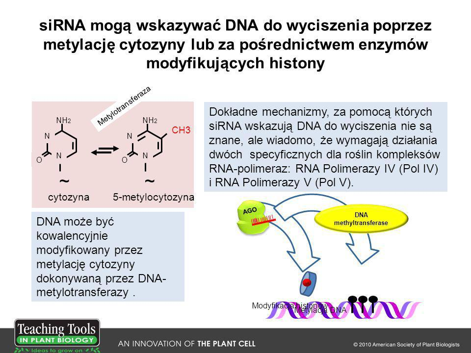 DNA methyltransferase