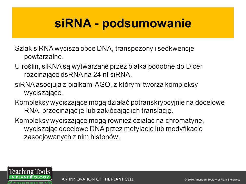 siRNA - podsumowanie