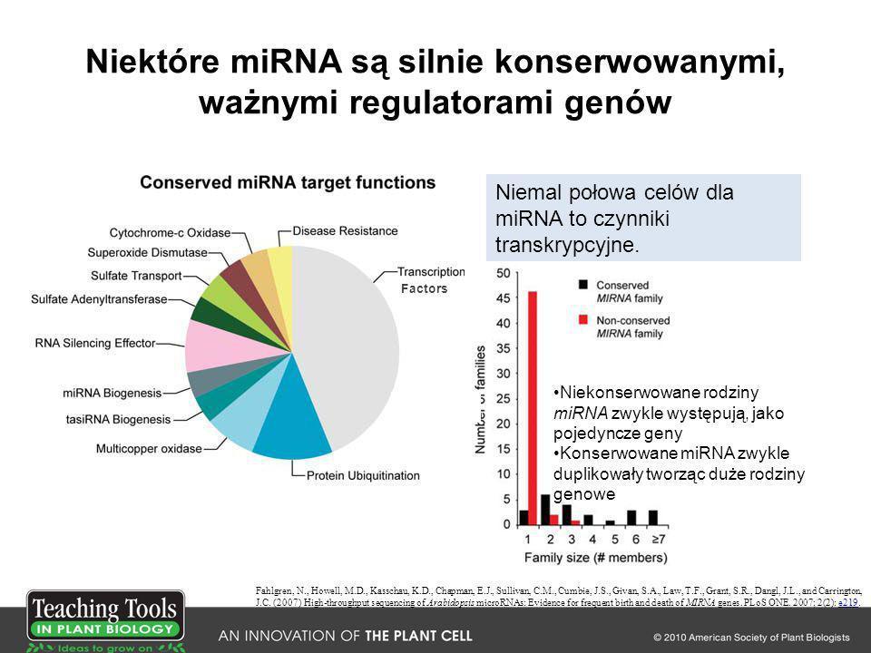 Niektóre miRNA są silnie konserwowanymi, ważnymi regulatorami genów