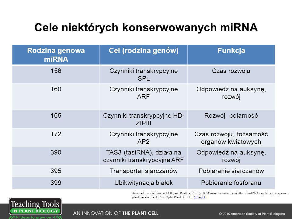 Cele niektórych konserwowanych miRNA