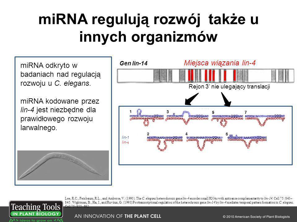 miRNA regulują rozwój także u innych organizmów