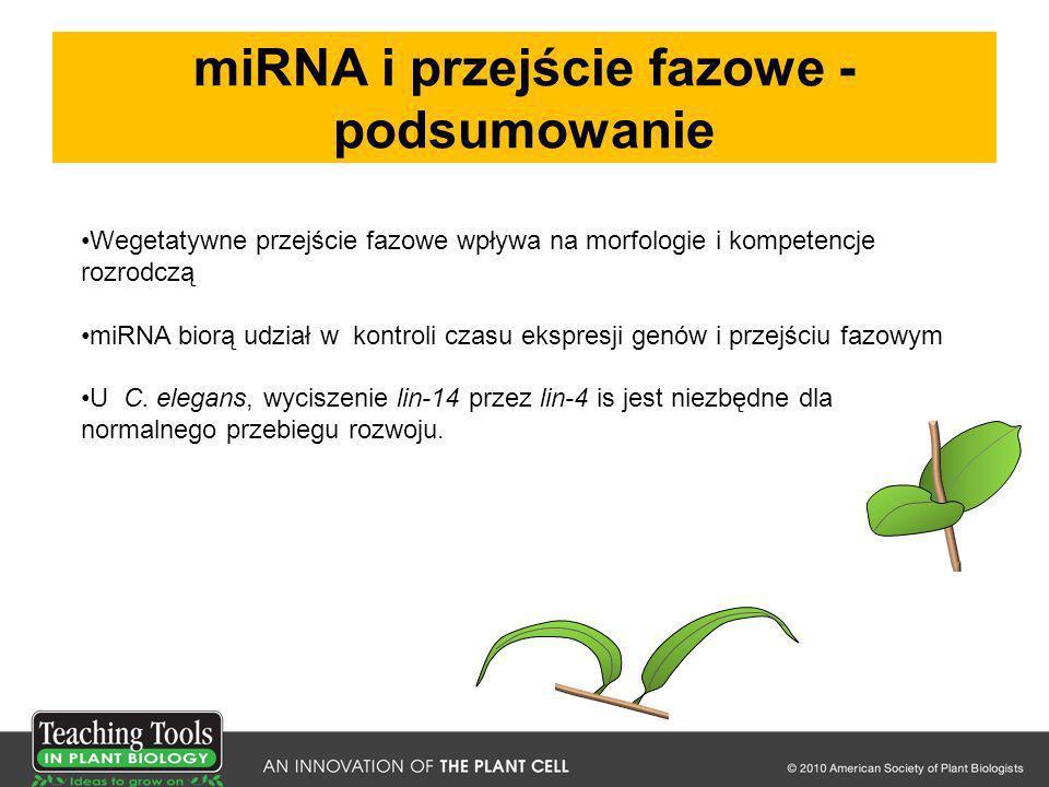 miRNA i przejście fazowe - podsumowanie
