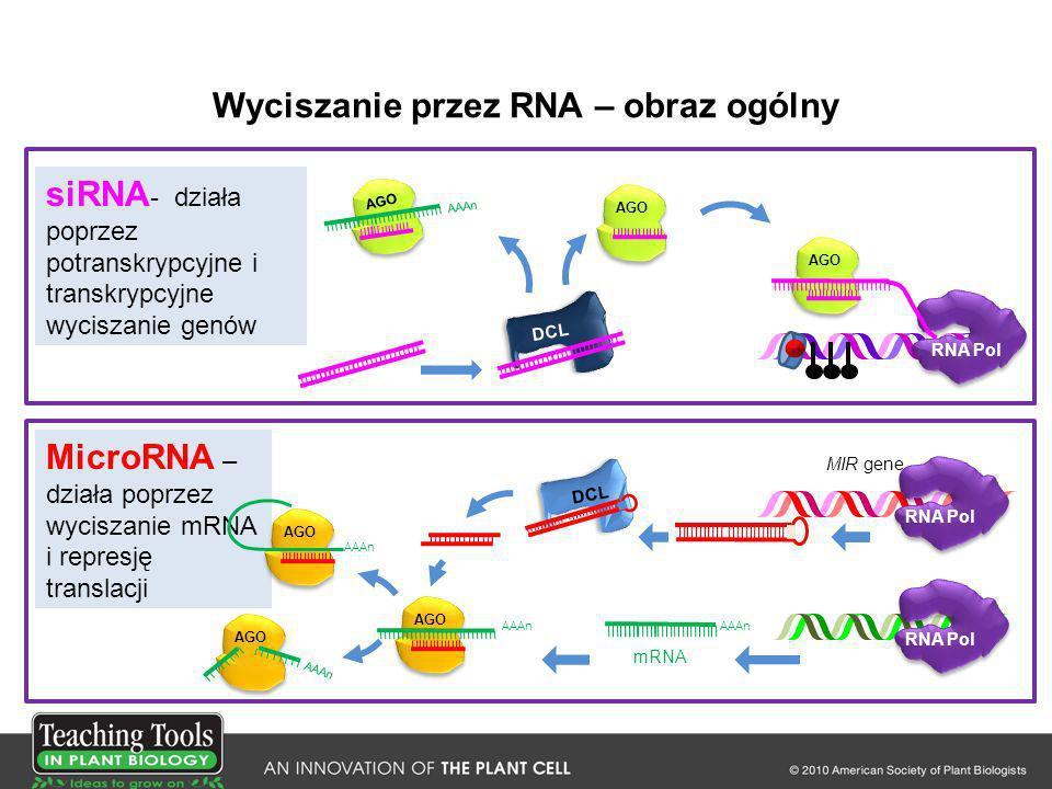 Wyciszanie przez RNA – obraz ogólny