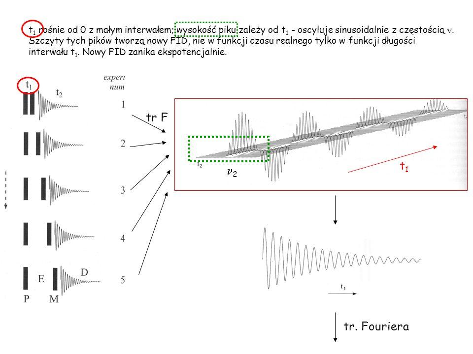 t1 rośnie od 0 z małym interwałem; wysokość piku zależy od t1 - oscyluje sinusoidalnie z częstością n. Szczyty tych pików tworzą nowy FID, nie w funkcji czasu realnego tylko w funkcji długości interwału t1. Nowy FID zanika ekspotencjalnie.