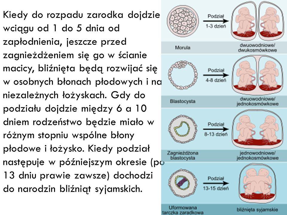 Kiedy do rozpadu zarodka dojdzie wciągu od 1 do 5 dnia od zapłodnienia, jeszcze przed zagnieżdżeniem się go w ścianie macicy, bliźnięta będą rozwijać się w osobnych błonach płodowych i na niezależnych łożyskach.