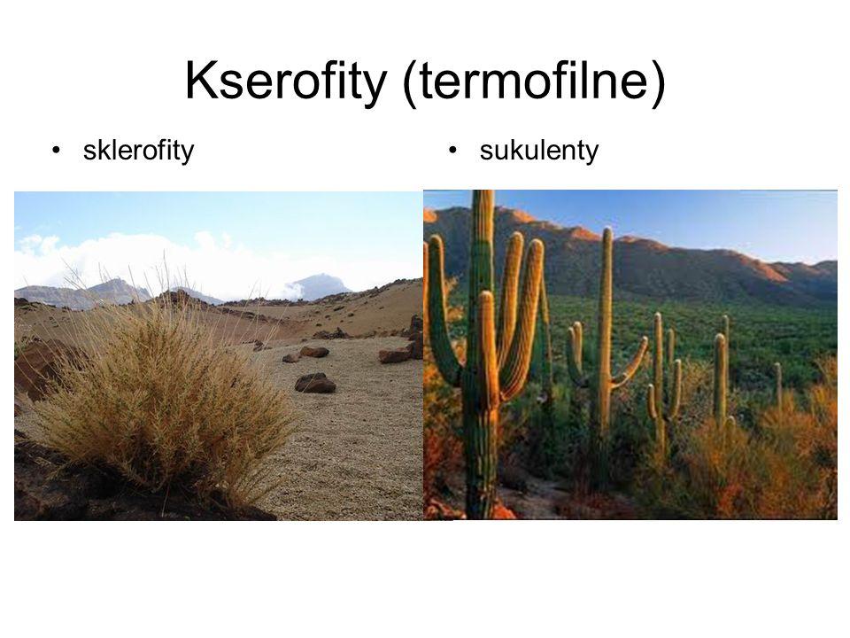 Kserofity (termofilne)