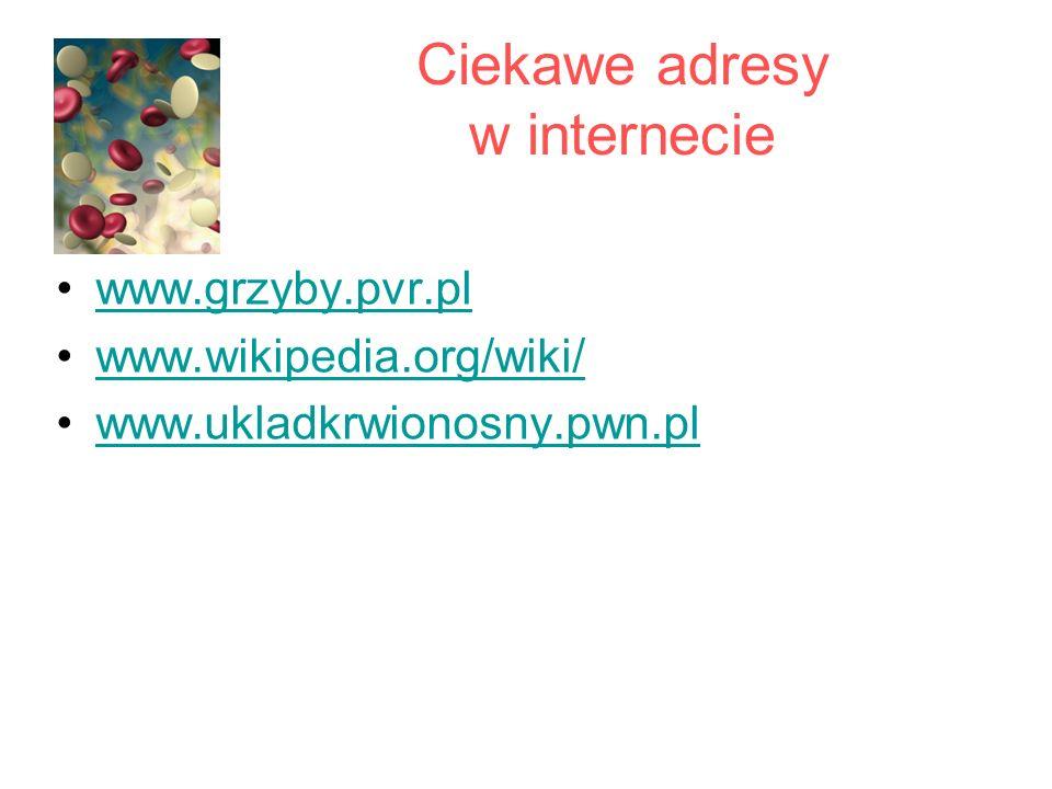 Ciekawe adresy w internecie