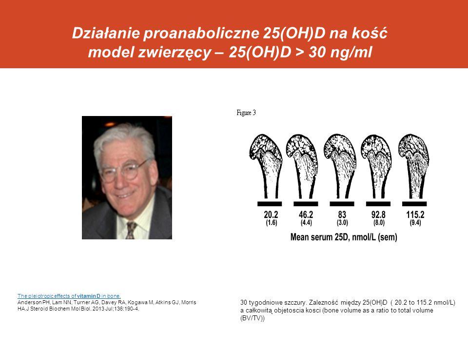 Działanie proanaboliczne 25(OH)D na kość model zwierzęcy – 25(OH)D > 30 ng/ml