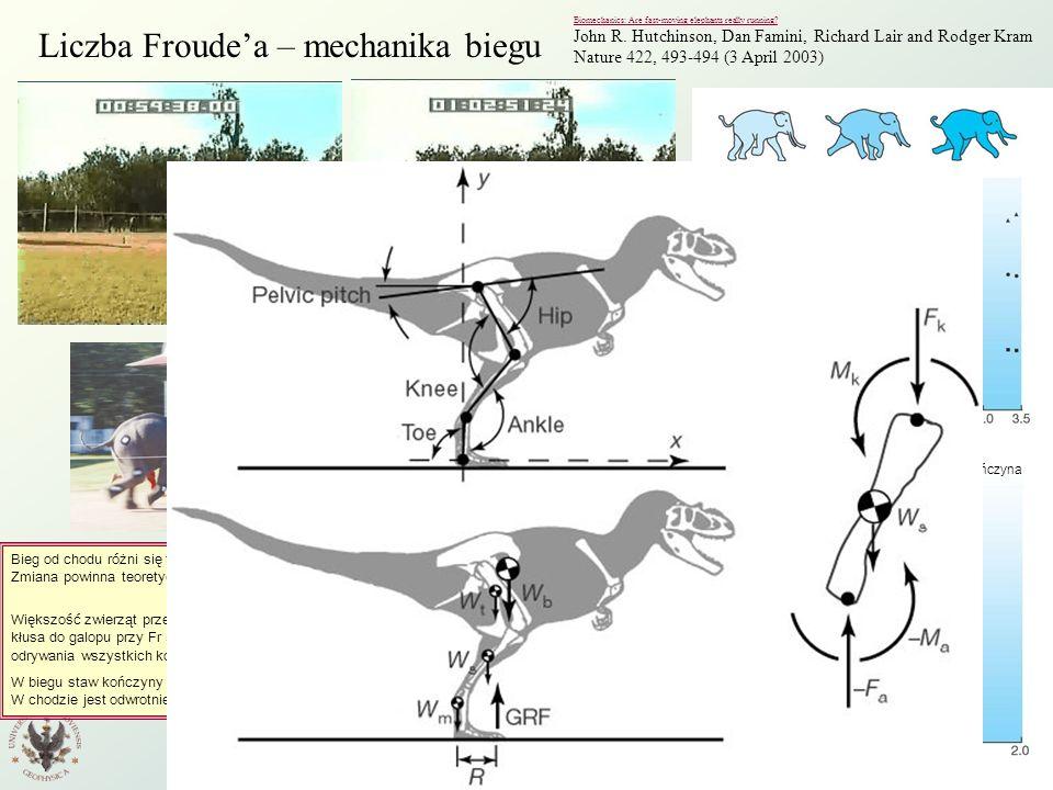 Liczba Froude'a – mechanika biegu