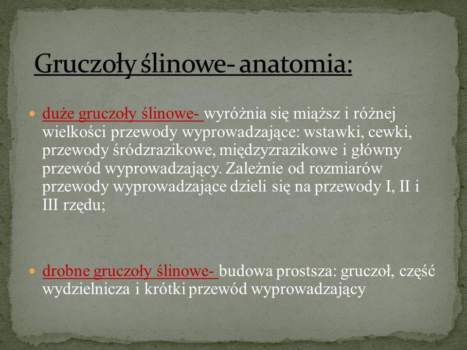 Gruczoły ślinowe- anatomia: