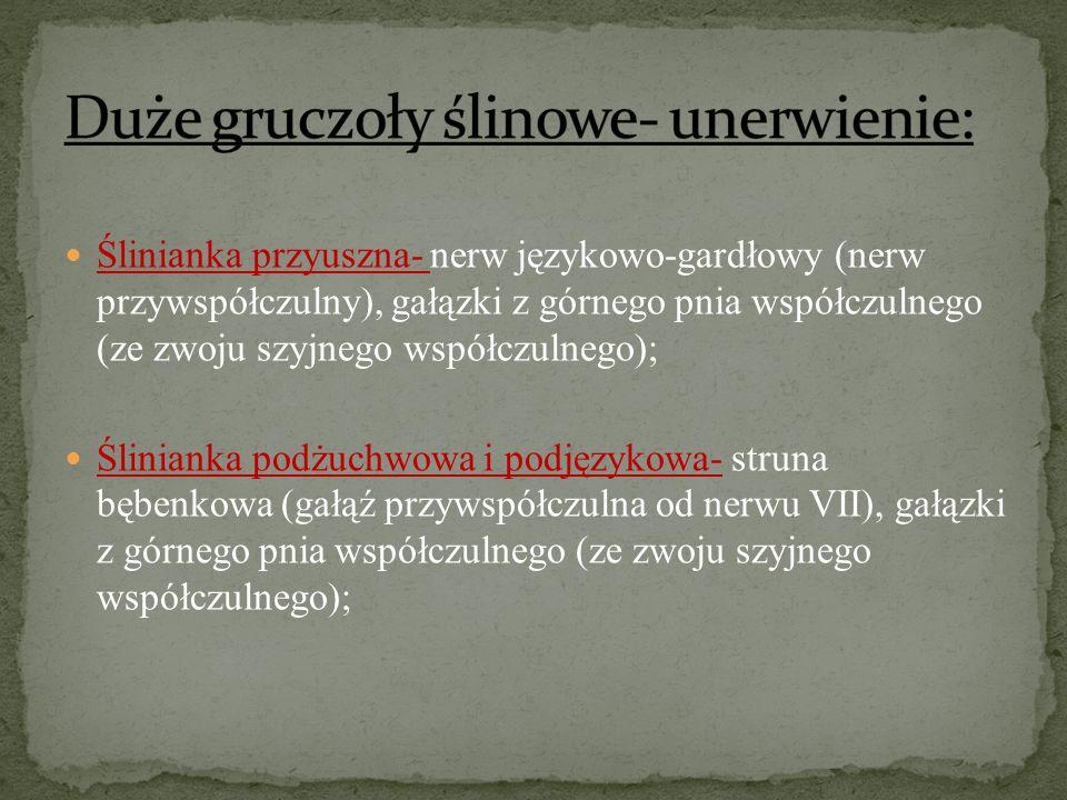 Duże gruczoły ślinowe- unerwienie: