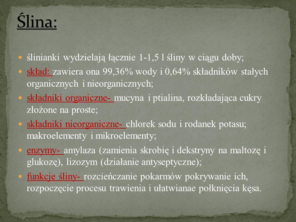 Ślina: ślinianki wydzielają łącznie 1-1,5 l śliny w ciągu doby;