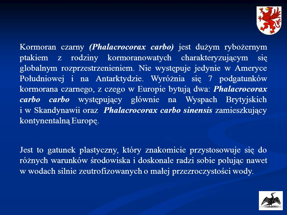 Kormoran czarny (Phalacrocorax carbo) jest dużym rybożernym ptakiem z rodziny kormoranowatych charakteryzującym się globalnym rozprzestrzenieniem. Nie występuje jedynie w Ameryce Południowej i na Antarktydzie. Wyróżnia się 7 podgatunków kormorana czarnego, z czego w Europie bytują dwa: Phalacrocorax carbo carbo występujący głównie na Wyspach Brytyjskich i w Skandynawii oraz Phalacrocorax carbo sinensis zamieszkujący kontynentalną Europę.