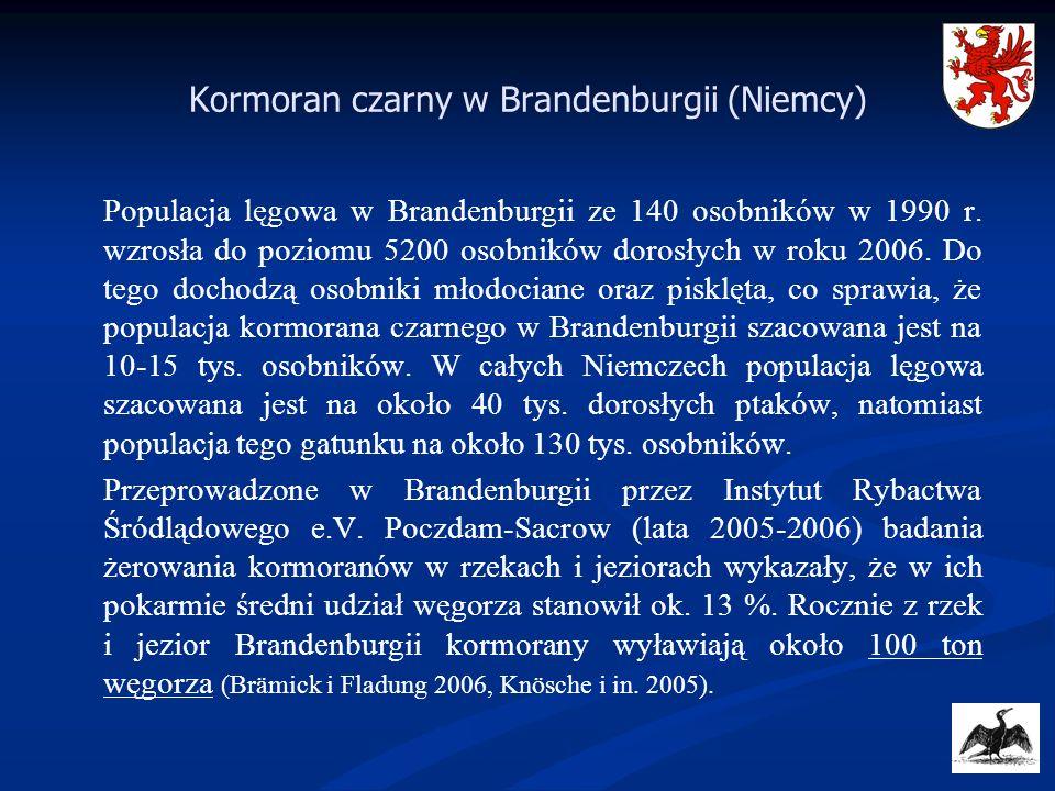 Kormoran czarny w Brandenburgii (Niemcy)