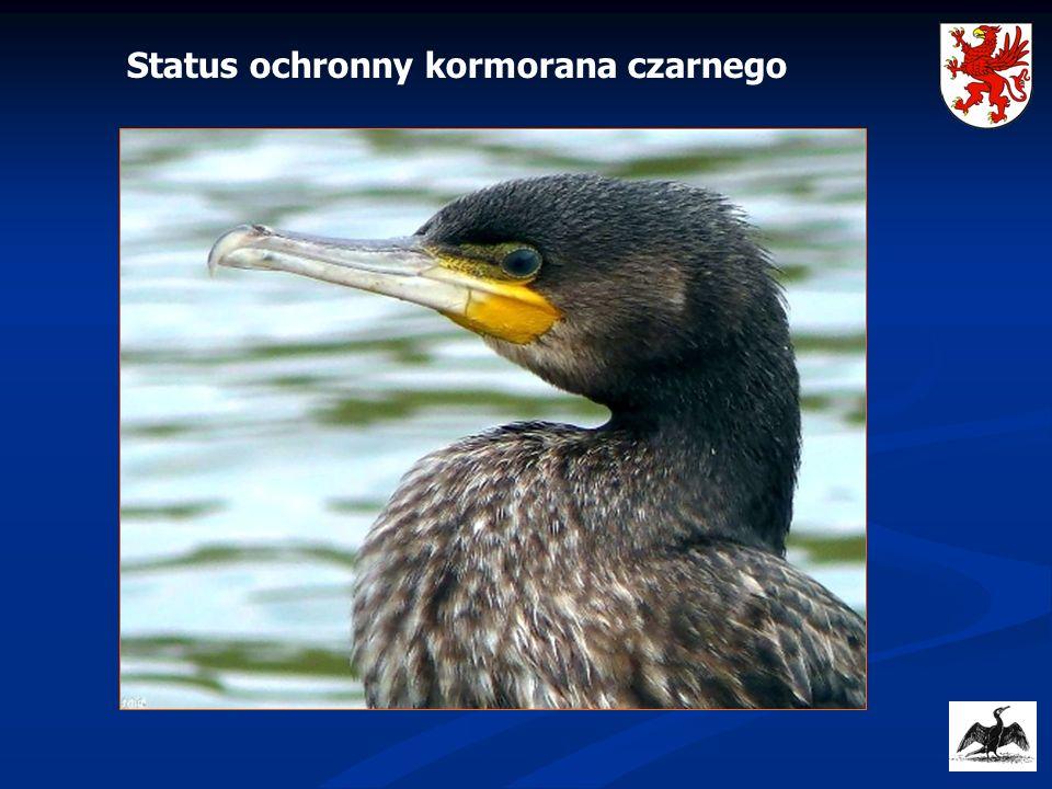 Status ochronny kormorana czarnego