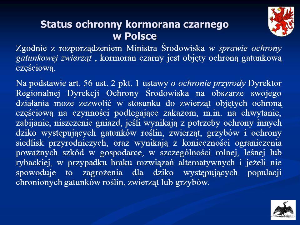 Status ochronny kormorana czarnego w Polsce
