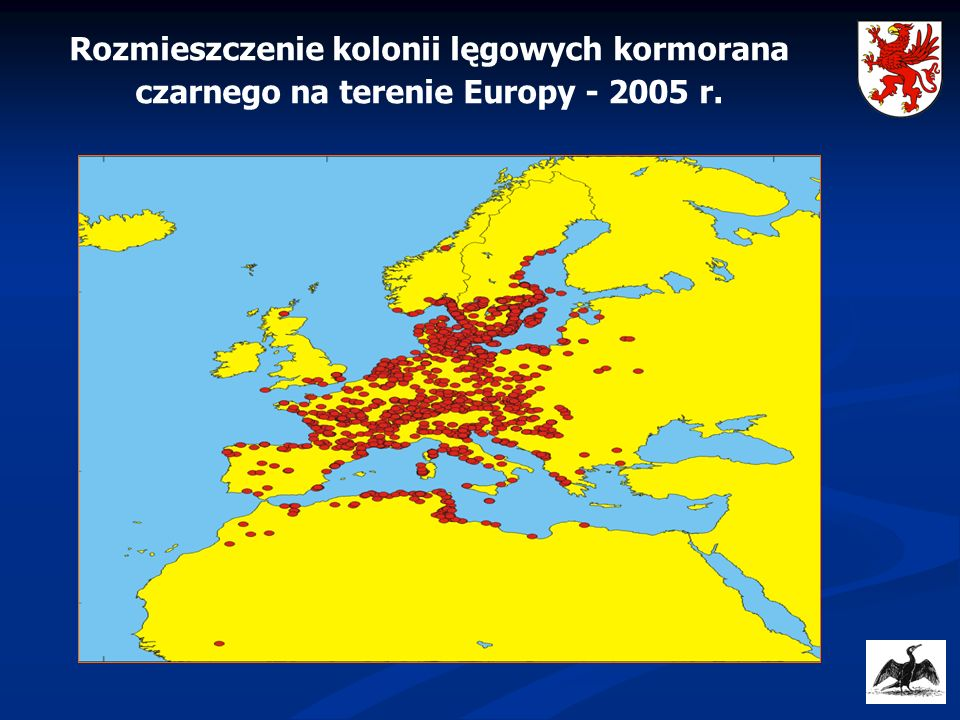 Rozmieszczenie kolonii lęgowych kormorana czarnego na terenie Europy - 2005 r.