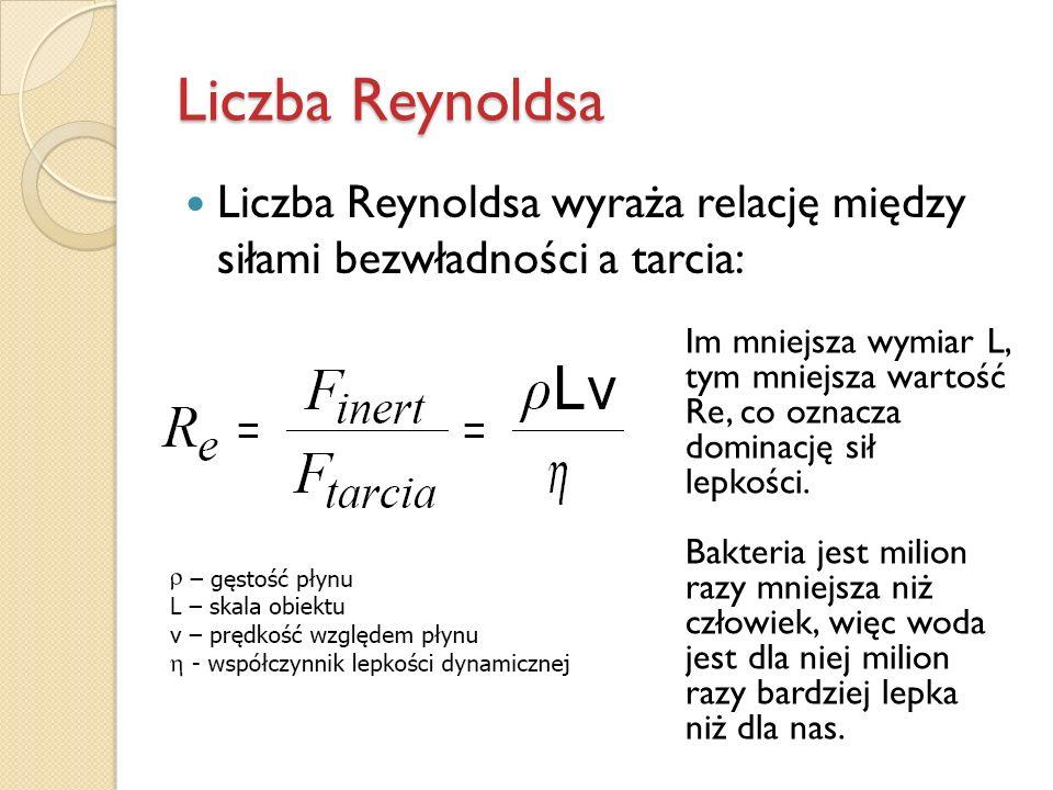 Liczba Reynoldsa Liczba Reynoldsa wyraża relację między siłami bezwładności a tarcia: Im mniejsza wymiar L, tym mniejsza wartość Re, co oznacza.