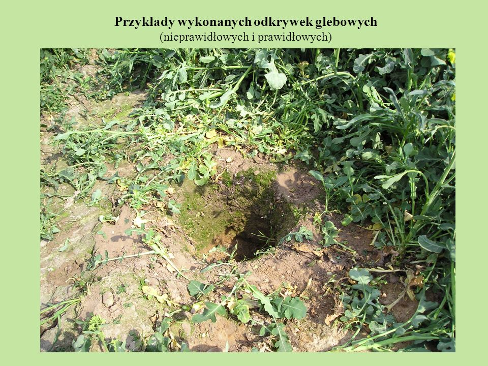 Przykłady wykonanych odkrywek glebowych (nieprawidłowych i prawidłowych)