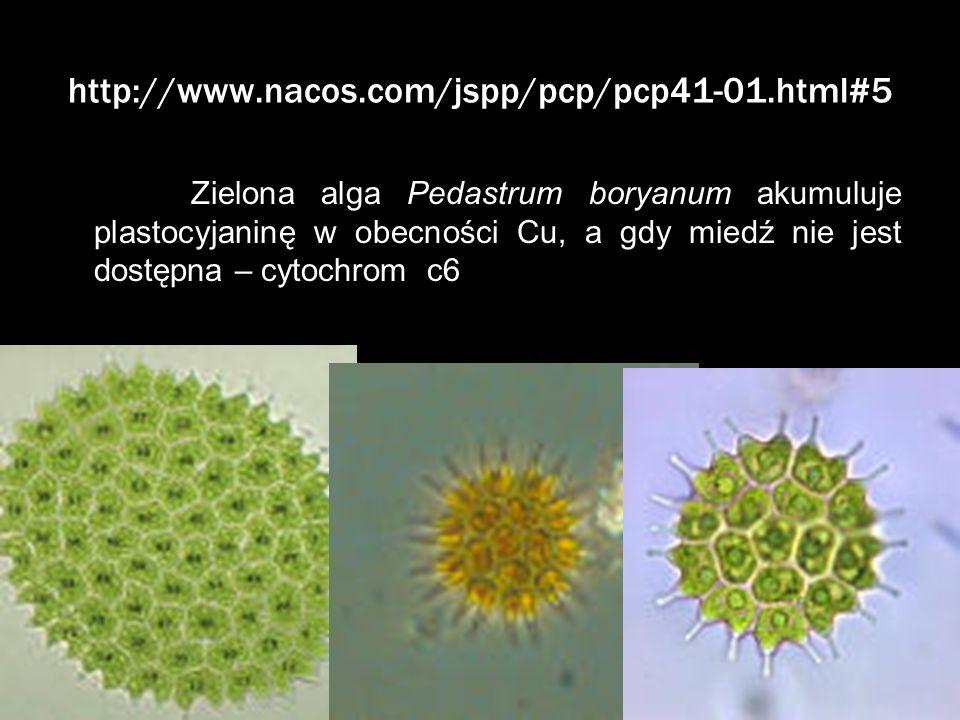 http://www.nacos.com/jspp/pcp/pcp41-01.html#5