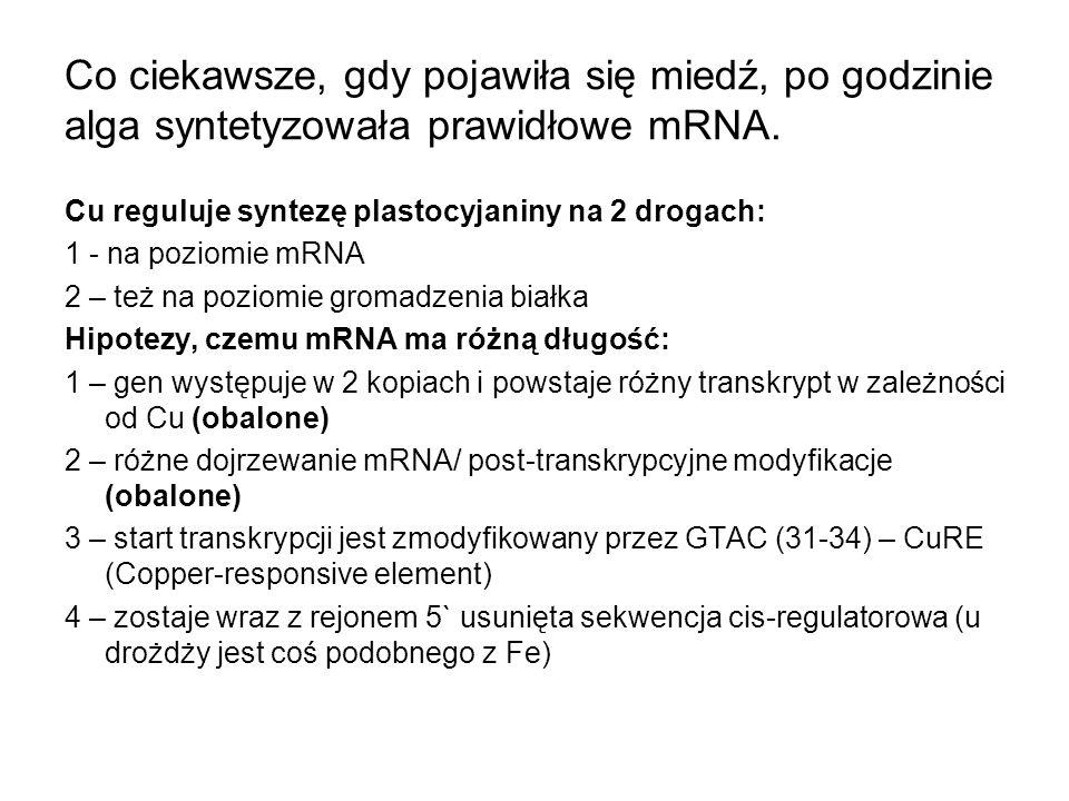 Co ciekawsze, gdy pojawiła się miedź, po godzinie alga syntetyzowała prawidłowe mRNA.