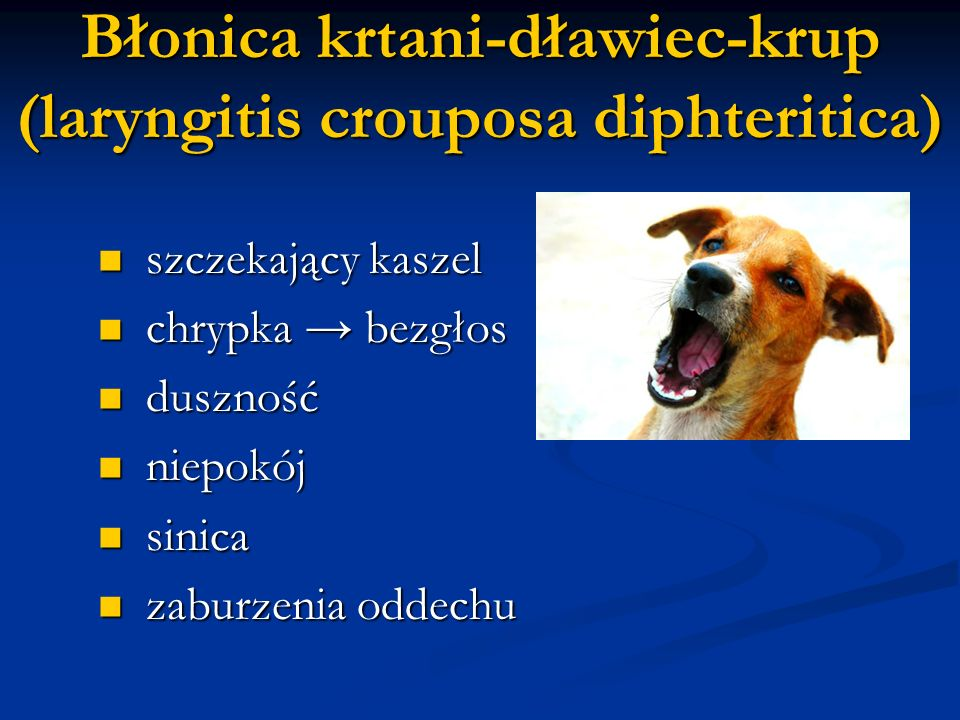 Błonica krtani-dławiec-krup (laryngitis crouposa diphteritica)