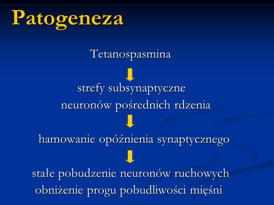 Patogeneza Tetanospasmina strefy subsynaptyczne