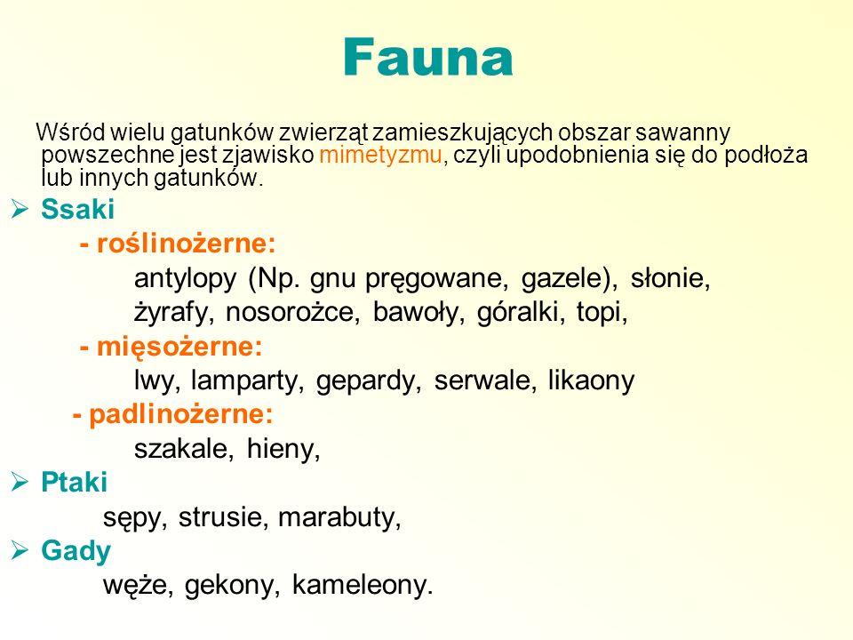 Fauna Ssaki - roślinożerne: