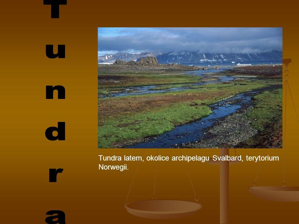 Tundra Tundra latem, okolice archipelagu Svalbard, terytorium Norwegii.