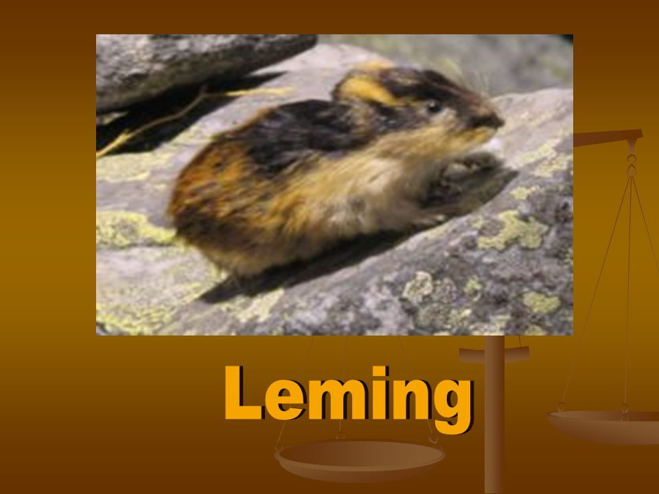 Leming