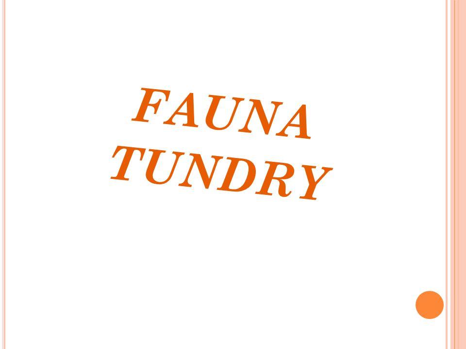 FAUNA TUNDRY
