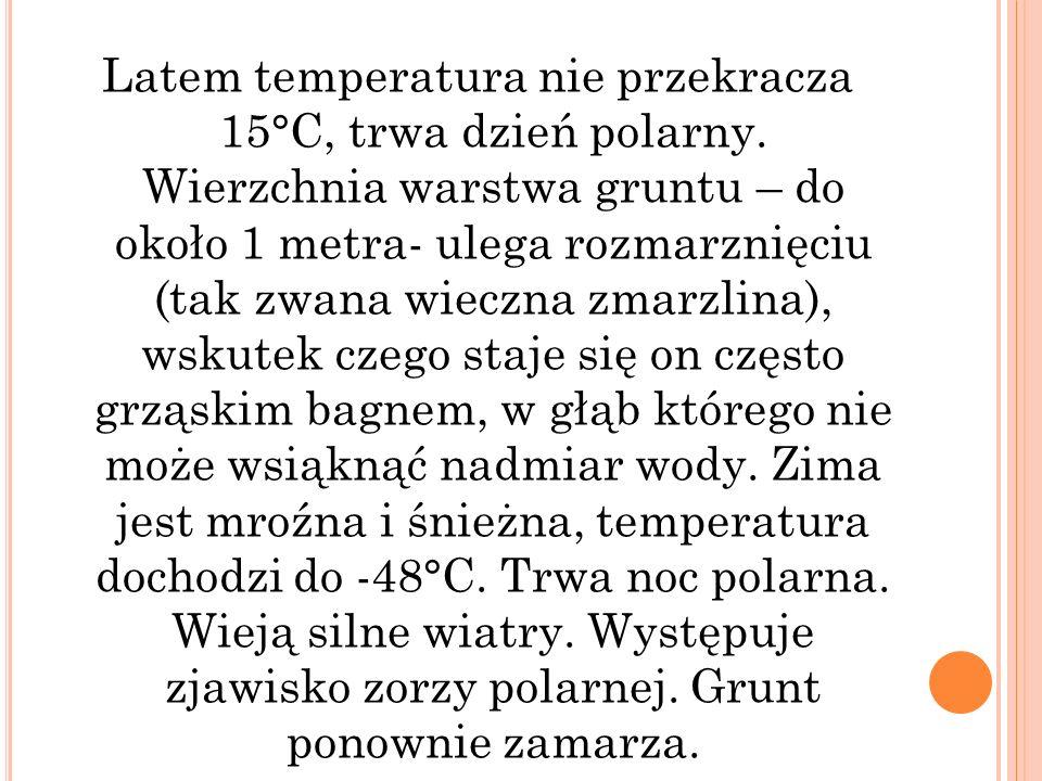 Latem temperatura nie przekracza 15°C, trwa dzień polarny