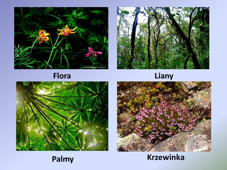 Flora Liany Krzewinka Palmy