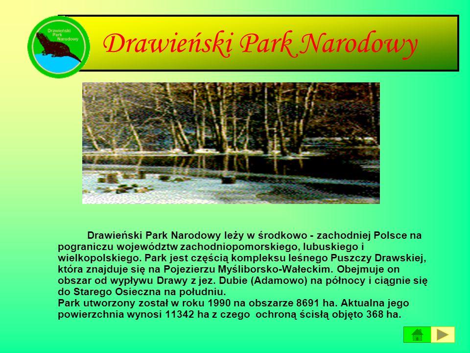 Drawieński Park Narodowy