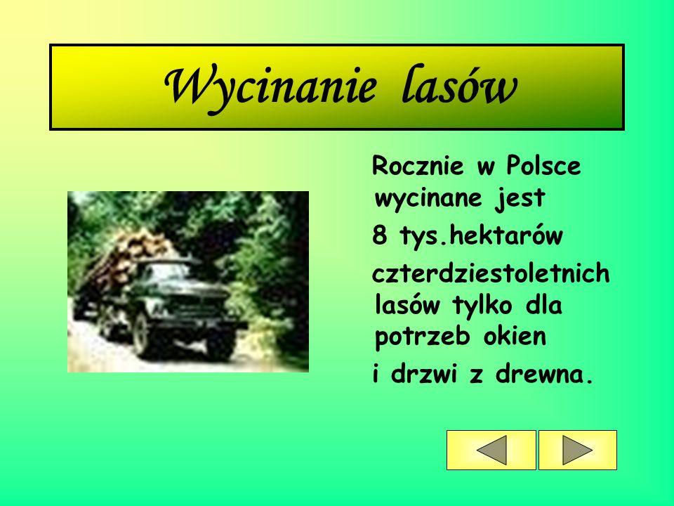 Wycinanie lasów Rocznie w Polsce wycinane jest 8 tys.hektarów