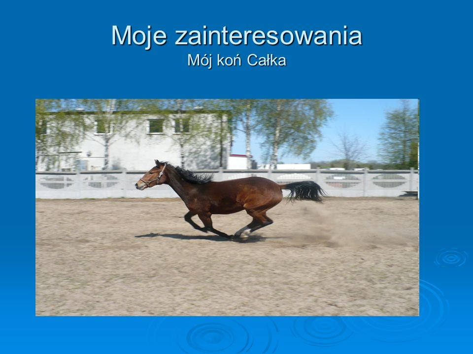 Moje zainteresowania Mój koń Całka