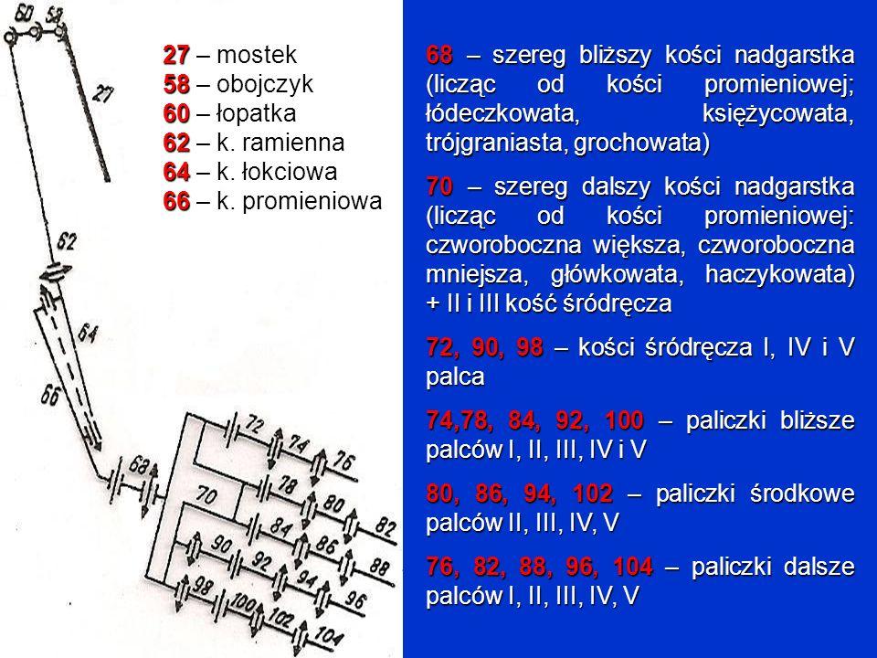 68 – szereg bliższy kości nadgarstka (licząc od kości promieniowej; łódeczkowata, księżycowata, trójgraniasta, grochowata)