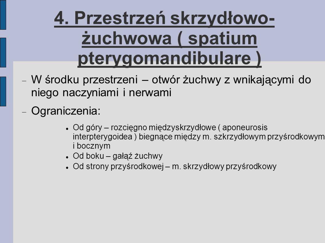 4. Przestrzeń skrzydłowo- żuchwowa ( spatium pterygomandibulare )
