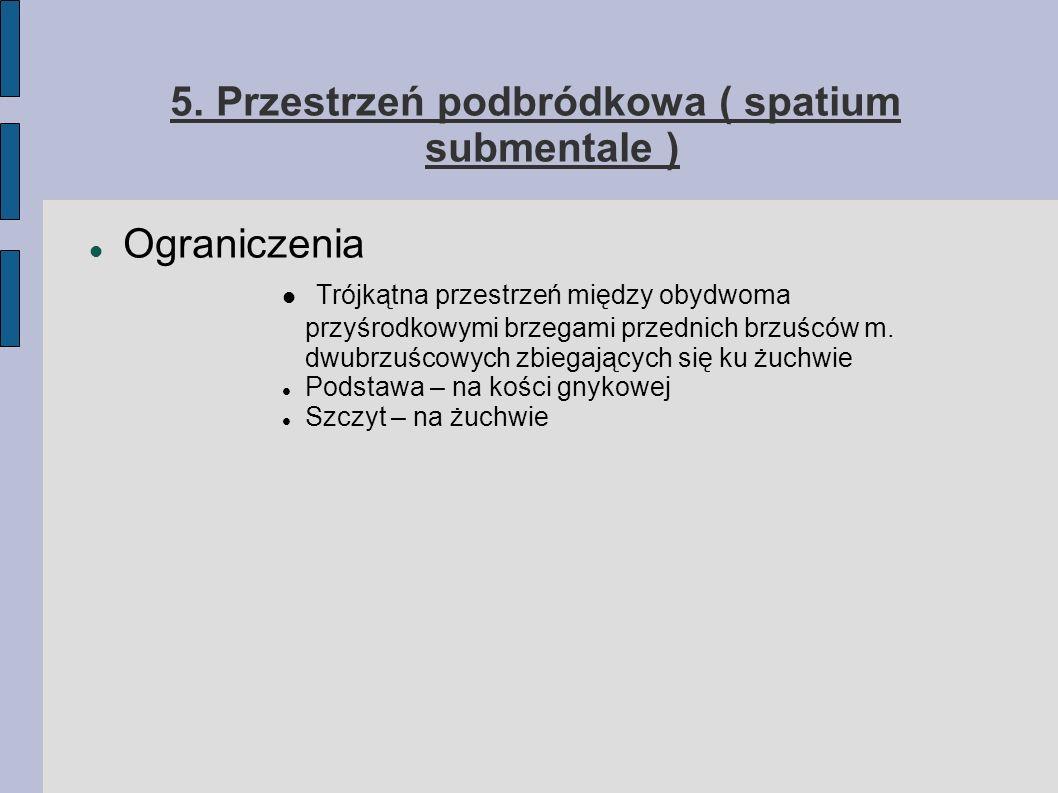 5. Przestrzeń podbródkowa ( spatium submentale )