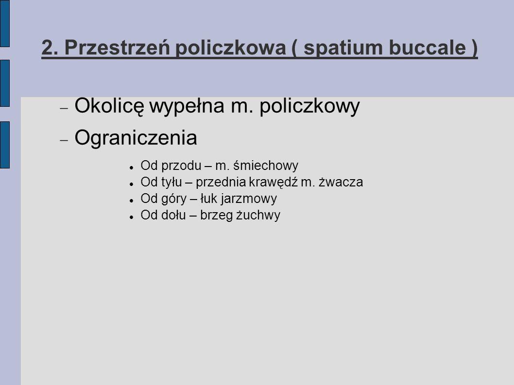 2. Przestrzeń policzkowa ( spatium buccale )