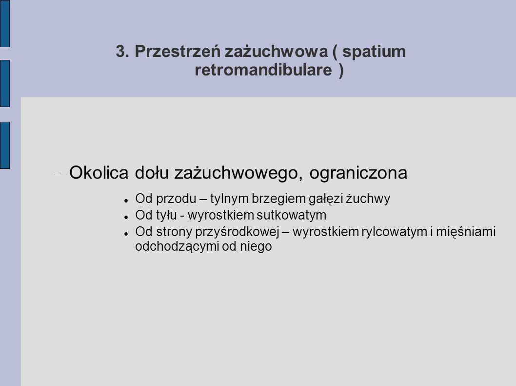 3. Przestrzeń zażuchwowa ( spatium retromandibulare )