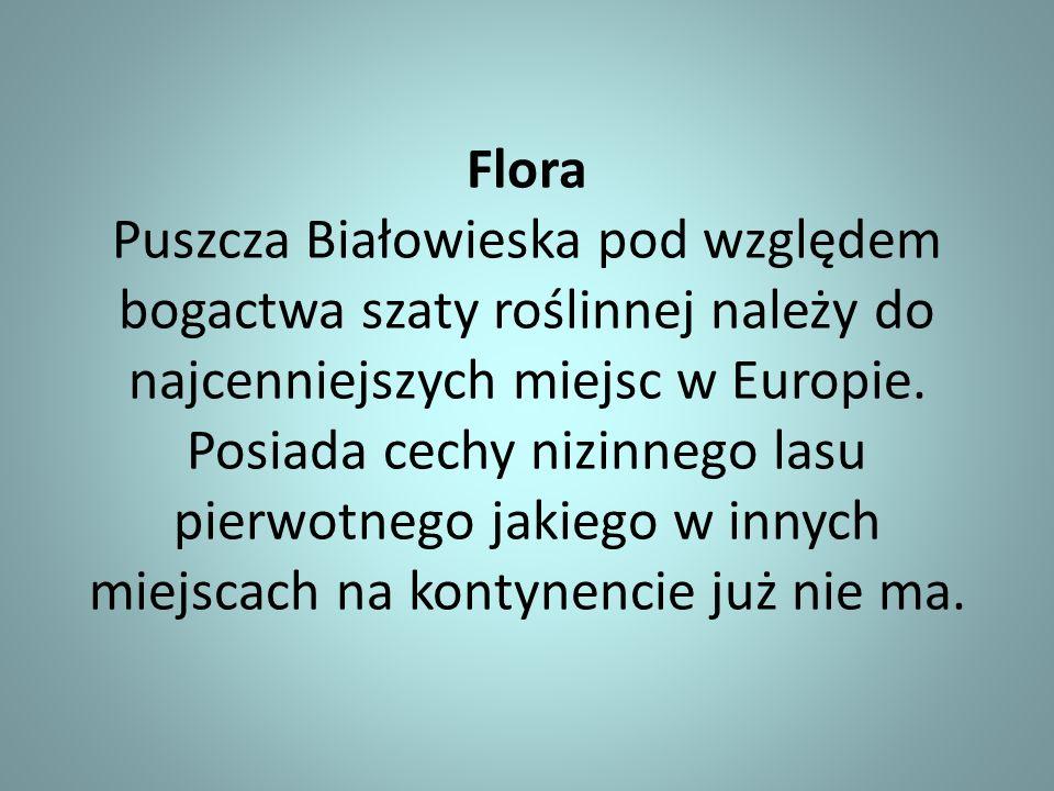 Flora Puszcza Białowieska pod względem bogactwa szaty roślinnej należy do najcenniejszych miejsc w Europie.