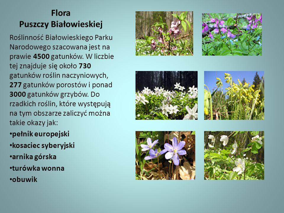 Flora Puszczy Białowieskiej