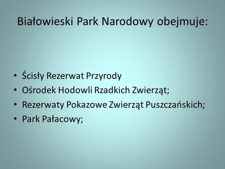 Białowieski Park Narodowy obejmuje: